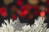 Christmas star — Stockfoto