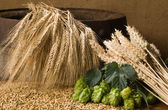 Wheat with hop cones — Stock Photo