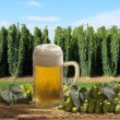 Stock Photo: Beer and hops
