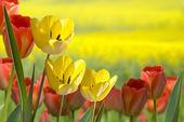 Cama de flores — Foto de Stock