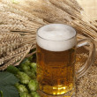 Beer glass — Foto de Stock
