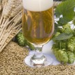 Foto de Stock  : Glass of beer