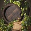 Hop cones with old barrel - Stock Photo