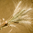Winter wheat — Stock Photo