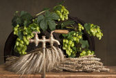 Hop and barley malt — Stock Photo