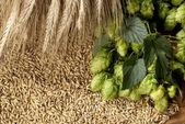 Barley — Stock Photo
