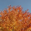 Autumn tree and sky — Stock Photo