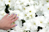 Hand and flowers — Stock Photo