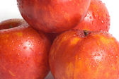 Four dropped plums close up — Stock Photo