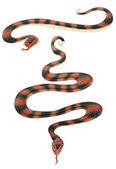 Snakes — Stock Photo