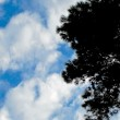 Tree silhouette on Sky and clouds background — Stock Photo