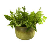 Fresh herbs in pottery — Stock Photo
