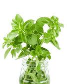 Fresh organic herbs basil sprig in a jar — Stock Photo