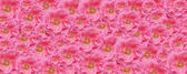 Pink rose texture wallpaper floral backdrop — Stock Photo