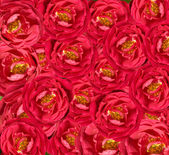 Beautiful floral red rose background — Stock Photo
