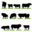 Stock Vector: 11 Bulls Silhouettes Set