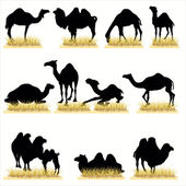 Zestaw 12 sylwetka wielbłąd — Wektor stockowy