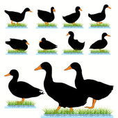 Ducks Silhouettes Set — Stock Vector