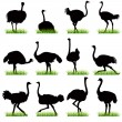 Stock Vector: Ostriches Silhouettes Set
