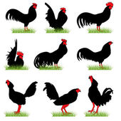 9 Roosters Silhouettes Set — Stock Vector