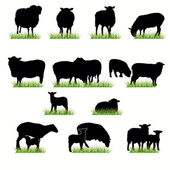 Sheeps Silhouettes Set — Stock Vector
