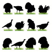 12 Turkey silhouettes set — Stock Vector