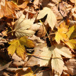 Fallen autumn leaves - Photo