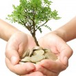 Stock Photo: Money tree growth