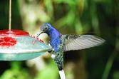 Humming bird — Stock Photo