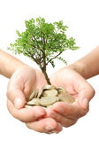 Money tree growth — Stock Photo