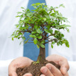 Tree in hands of businessman — Stock Photo