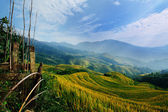 Rice terrace with blue sky — Stock Photo