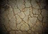 Cracked soil — Stock Photo