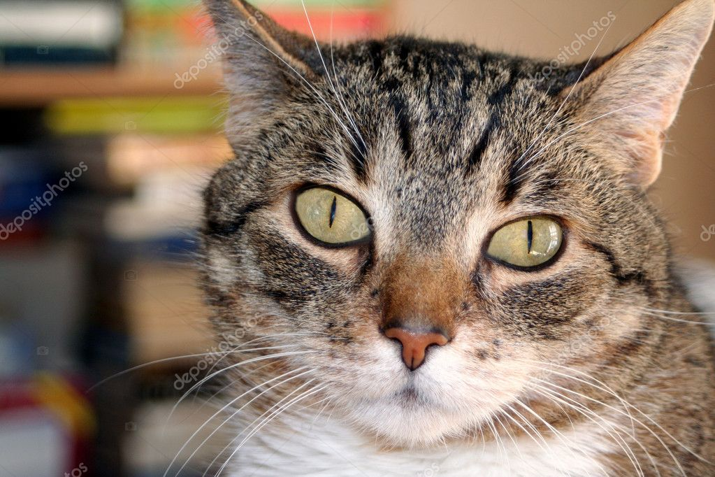 Closeup of a tabby cat with wide eyes. — Stock Photo #6848394