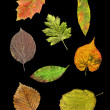 Leaves of 8 species in autumn - Stock Photo
