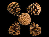 Five cones of Crimean pine — Stock Photo