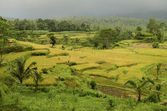 Landscape of bali, indonesia — Stockfoto