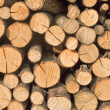 Logs — Stock Photo #6827676