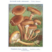 Mushroom atlas — Stock Photo