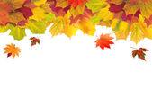 白でカラフルな葉の秋のカード — ストック写真
