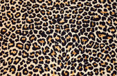 Abstract texture of leopard fur (skin) — Stock Photo