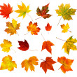 Big collection of beautiful colourful autumn leaves isolated on — Stock Photo #6950932