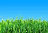 Green grass over blue background — Stock Photo