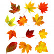 Big collection beautiful colourful autumn leaves isolated on whi — Stock Photo #7332808