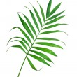 Green leaf of fern isolated on white — Stock Photo #7332864