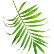 Green leaf of fern isolated on white — Stock Photo #7615519