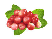 Cranberry with green mint leaves isolated on white background — Stock Photo