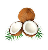 Halfs of coconut on green leaves isolated on white — Stock Photo