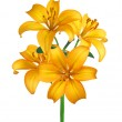 Beautiful yellow lily isolated on white — Stock Photo