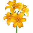 Beautiful yellow lily isolated on white — Stock Photo #7630307